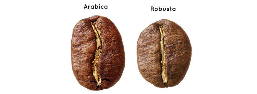 Différences entre café robusta et café arabica